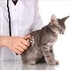 Ветеринарные клиники в Баймаке
